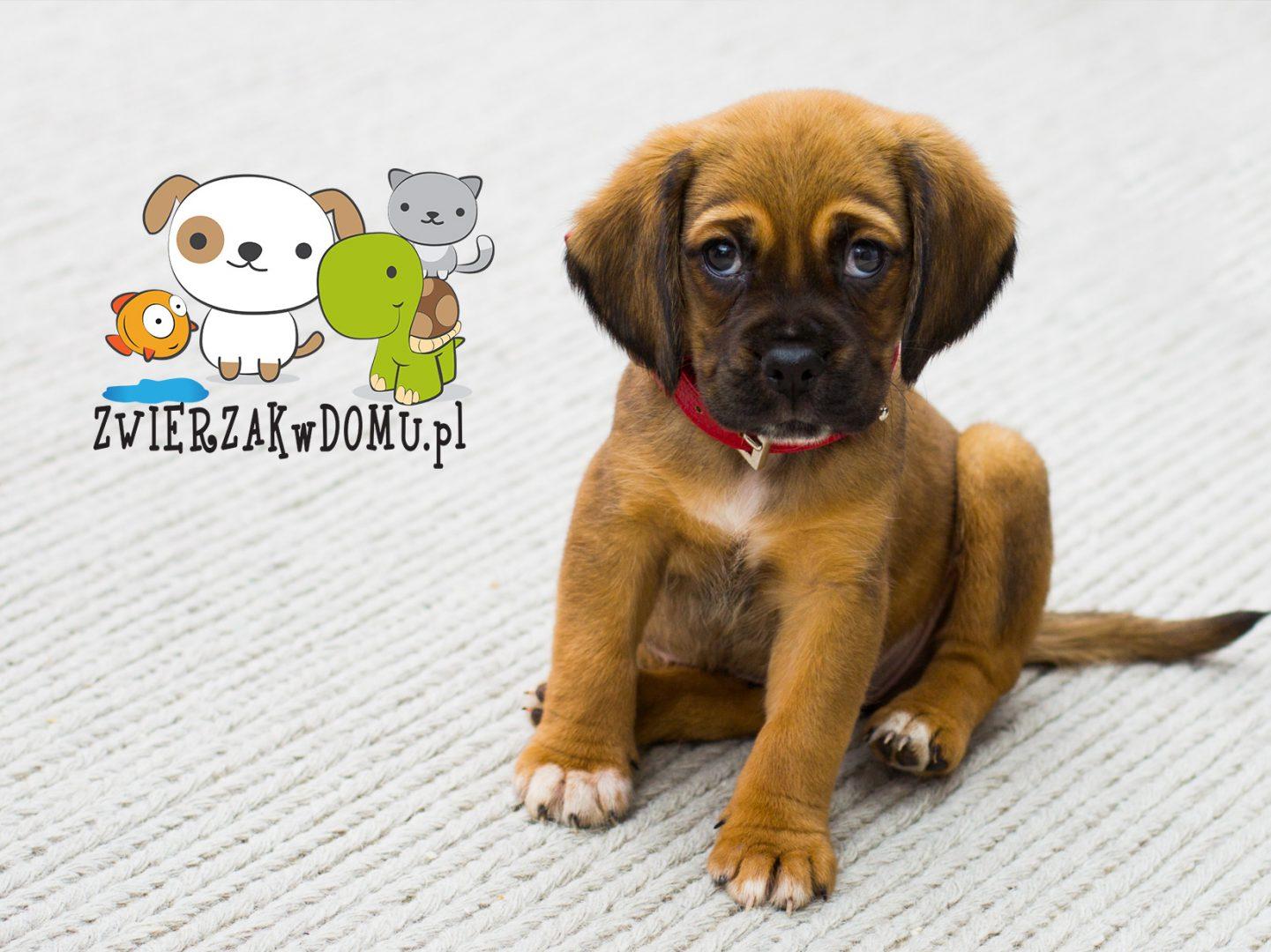 Blog o zwierzętach Zwierzakwdomu.pl
